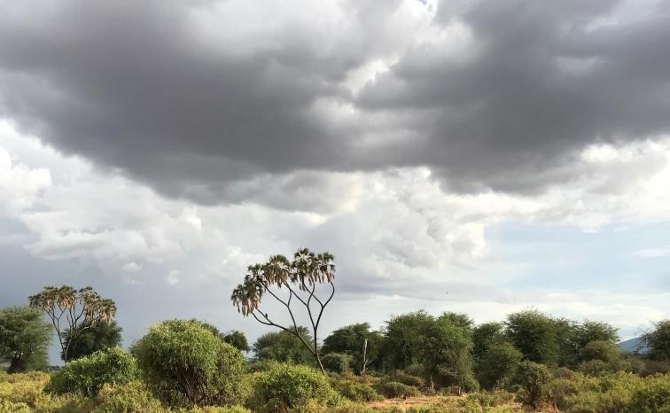 samburu landscape 1